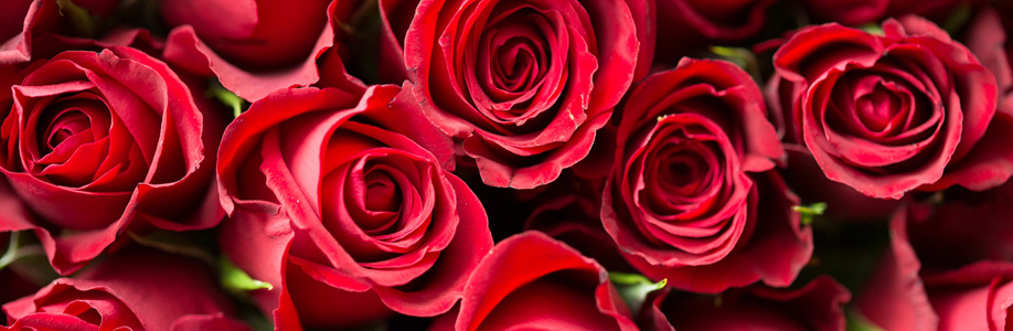 Red Roses Bunched Together